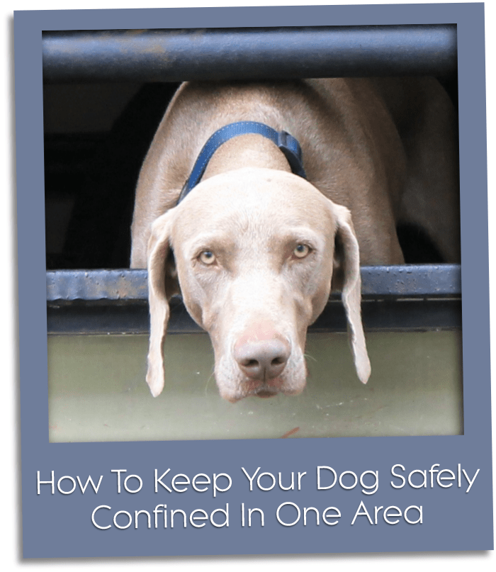 how to keep your dog confined