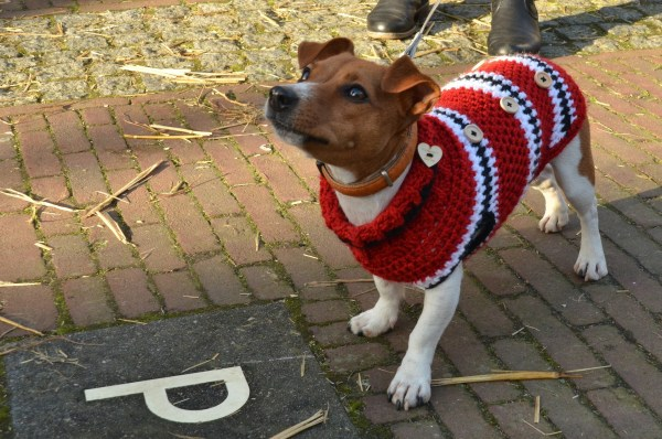 you and your Dog_Sweater