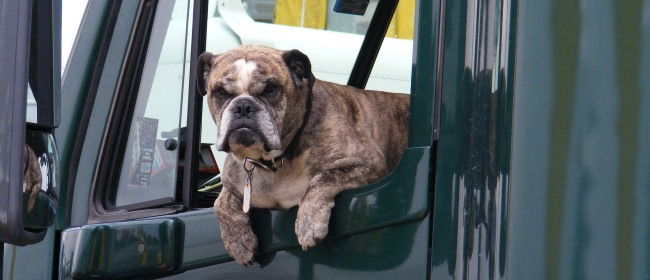 Road-Tripping with Fido – Tips for Car Travel with Your Dog
