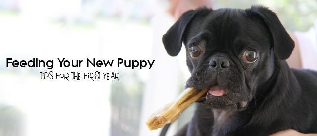 Feeding Your New Puppy: Tips for the First Year
