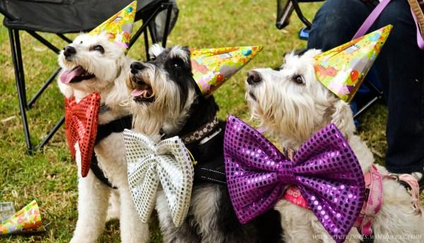 dog birthday venue