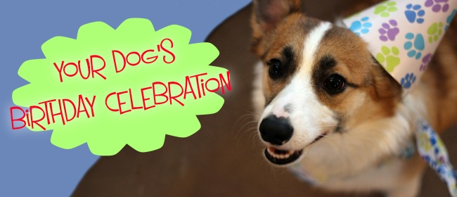 Top 6 Things You'd Want To Consider For Your Dog's Birthday Celebration