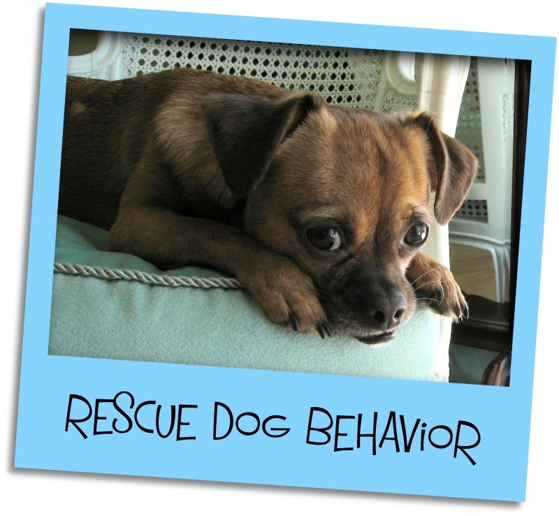 rescue dog grid