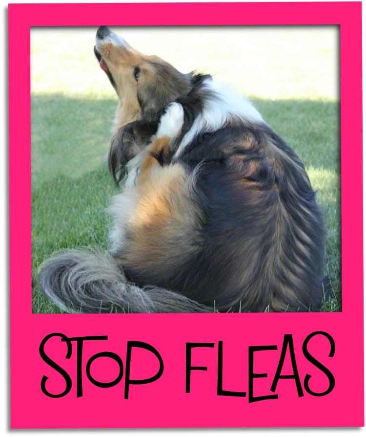 stop fleas gr