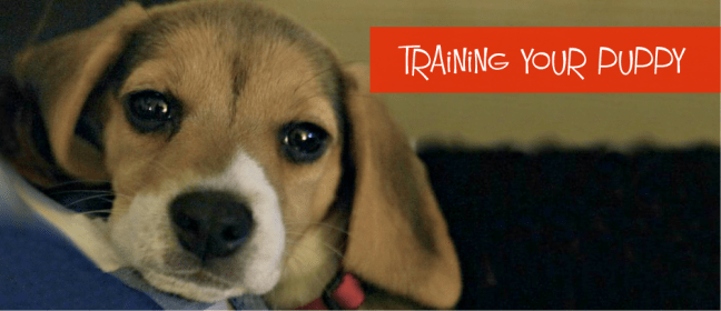 training your puppy cover