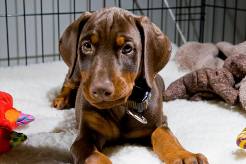 training your puppy crate