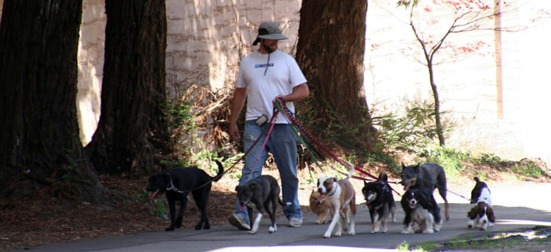 your pooch dog walker