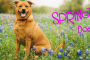 Spring, You and Your Dog: How To Get Ready