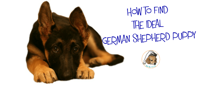 german shepherd puppy cover