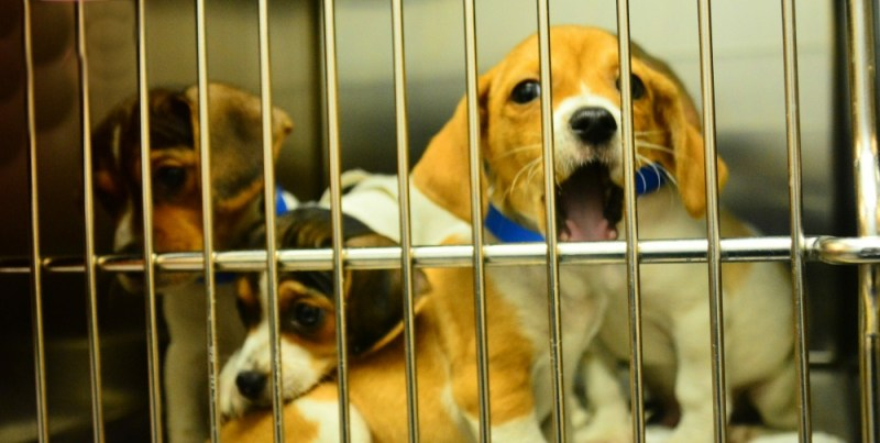 Rescue Shelter dogs