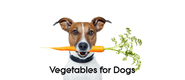 vegetable for dogs cover
