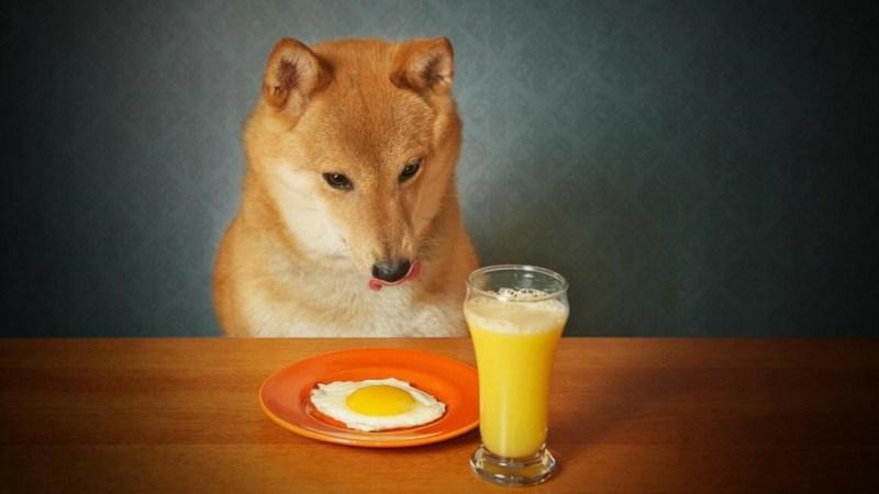 Dog Vitamins 2