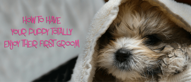 puppy first groom cover 1