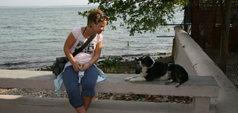 dog-friendly cuba Malecon