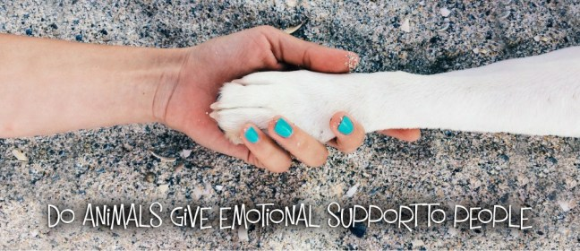 emotional support cover