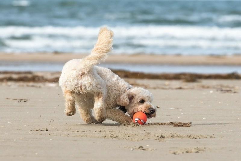 dog-friendly holiday uk 1