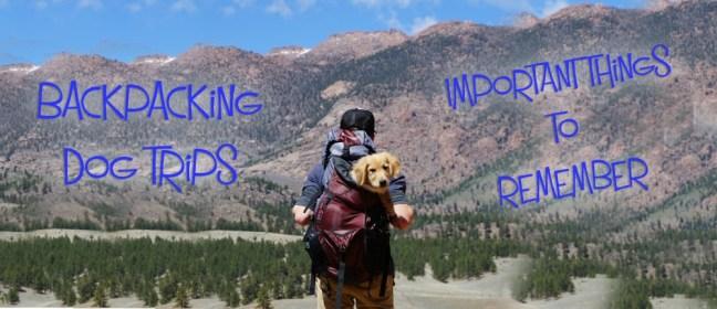 Backpacking Dog gr
