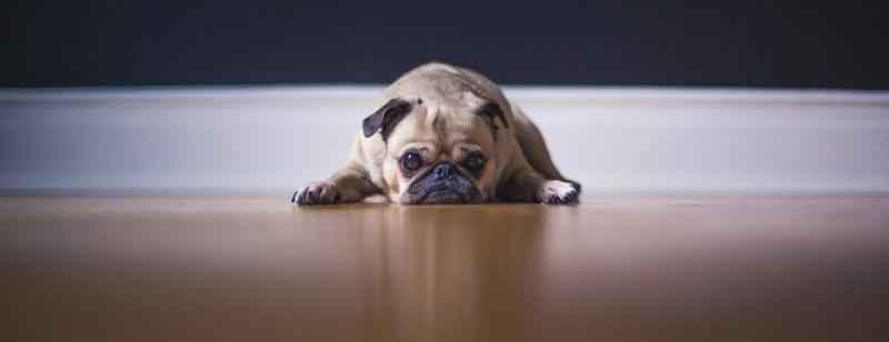 dog on floor
