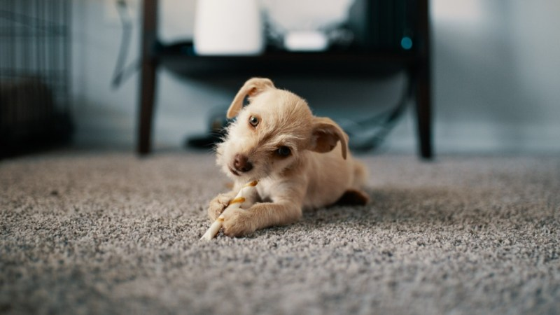 Breed-Specific dog eating food