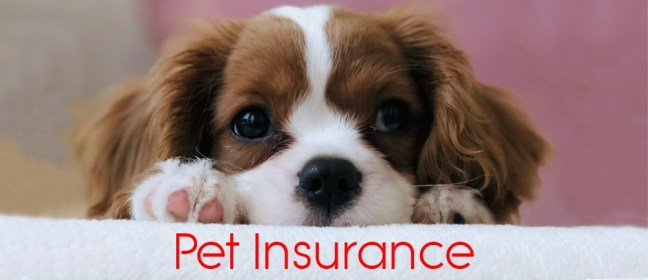 pet insurance tips cover