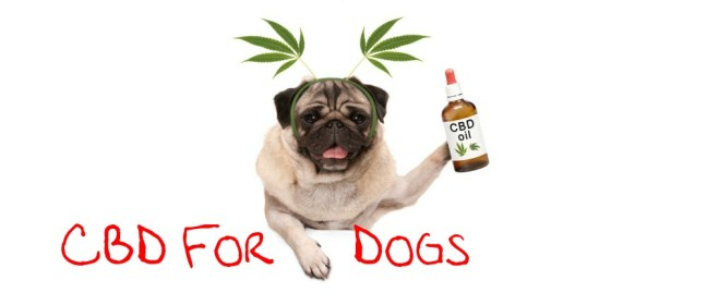 CBD for dogs cover