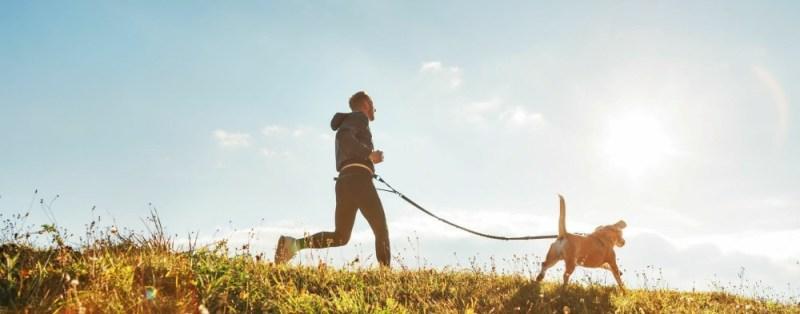 Diabetes dog and running