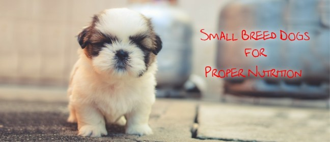 small breed dogs cover