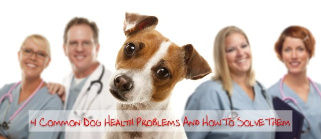 Dog Health Problems cover