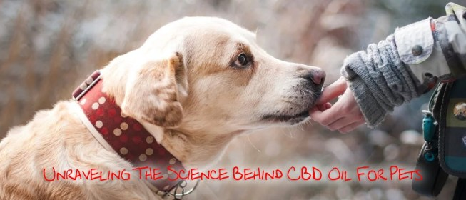 cbd OIL FOR PETS COVER 2