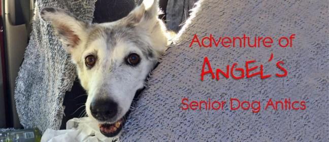 senior dog antics cover