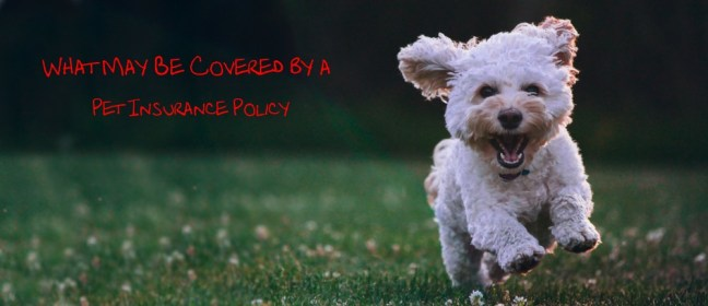 pet insurance policy cover