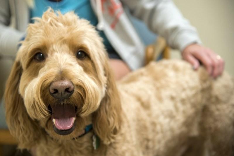 dog's health vet