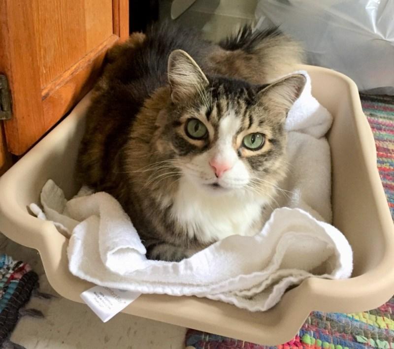 kitchen cat bed