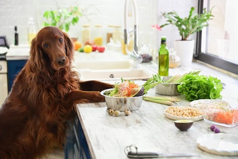 dog diy dog food in kitchen