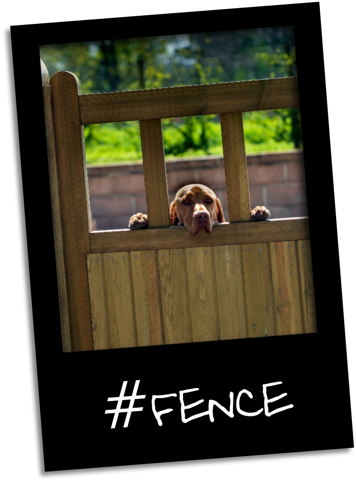 dog fence gr