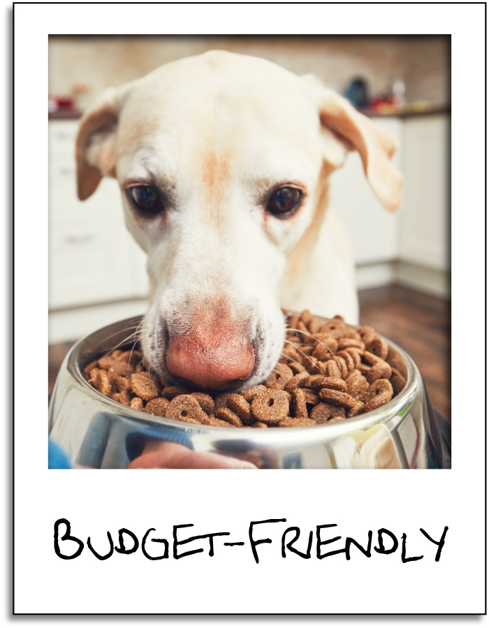 diet for your dog cover gr