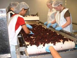 Boysenberry Factory1