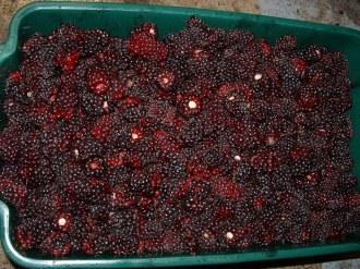 Boysenberry Tub2