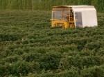Harvesting 2002 3