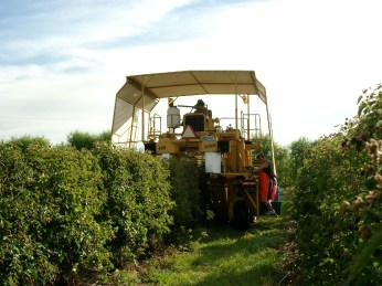 Harvesting 2002 4