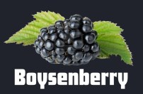 tile_boysenberry