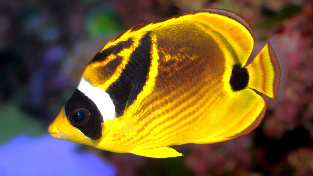 Where Buy Aquarium Plants