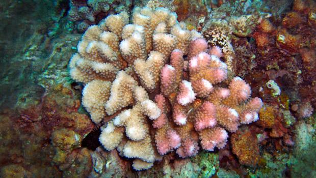 Types Names Jellyfish