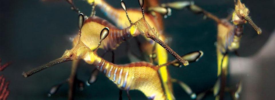 Waikīkī Aquarium 187 Amazing Adaptations