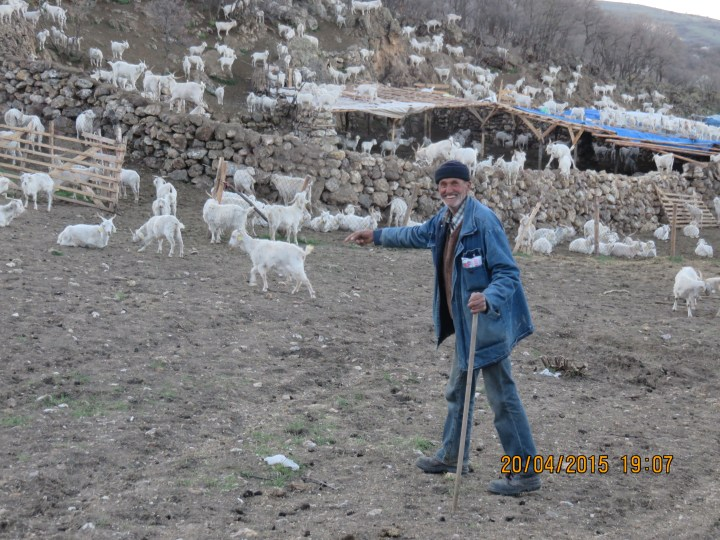 "Hiseyin ""The Goatherd"" near Ayas.This wonderful character walks around 30km daily on average with the 1350 Angoras he is in charge of.He has a donkey,two part time younger helpers and 17 Anatolian Shepherd guard dogs.He is 67,and very happy being out in the wilderness.Bob(my Kiwi/Swiss travelling mate) gave him his Swiss army knife,and he seemed pleased with that!"