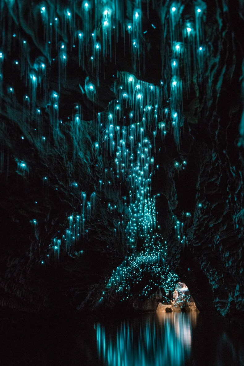 Waitomo 1617 Glowworms 2 - 10 Things You Must Do & See In New Zealand