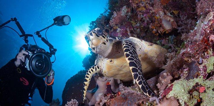 Recomendaciones para la mejor Fotografía submarina