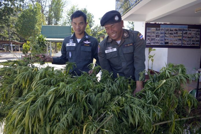 Thai Police Weed Giveaway !  100 Kilos Up For Grabs
