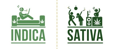 Get Motivated With This Sativa Strain Guide