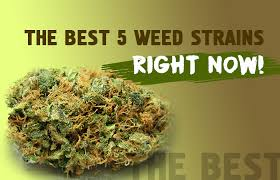 Check Out These Great Weed Strains